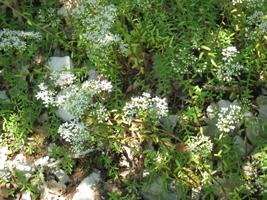 IMG_7047-groen-wit-bloemen