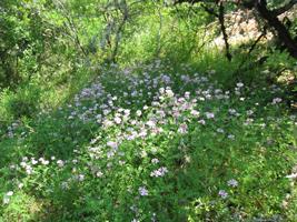 IMG_7049-groen-bloemen-mooi-bos